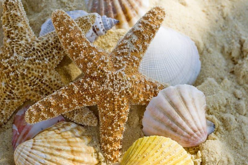 Zeester en shells op het strand royalty-vrije stock afbeelding