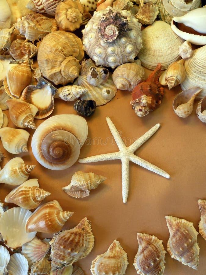 Zeester en shells patroon stock afbeelding
