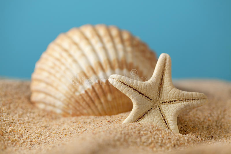 Zeester en zeeschelpen op strand stock afbeeldingen
