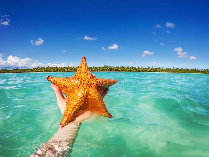 Zeester in hand, Caraïbische overzees en mooi tropisch eiland als achtergrond Tropisch strand met palm stock foto