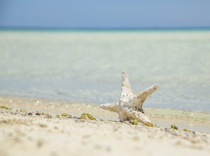 Zeester op de kust stock fotografie