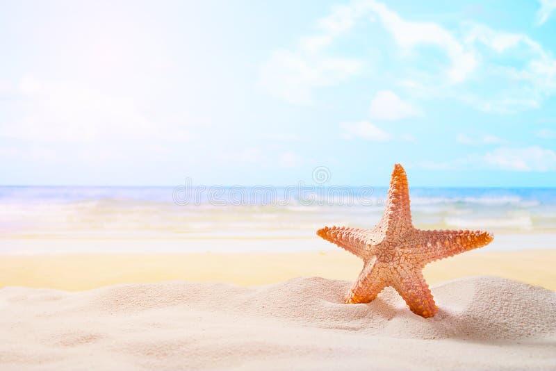 Zeester op de zomer zonnig strand bij oceaanachtergrond Reis, vac stock foto
