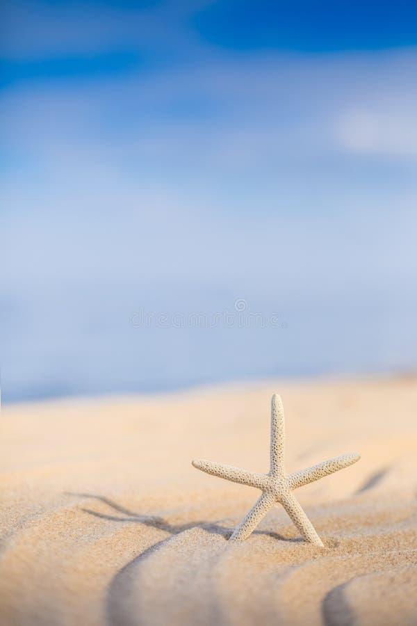 Zeester op een strandzand stock fotografie