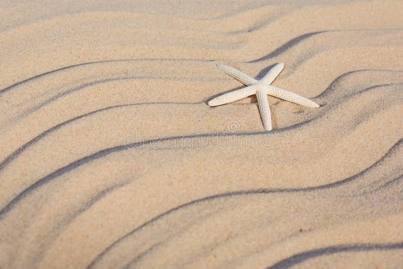 Zeester op een strandzand royalty-vrije stock afbeelding
