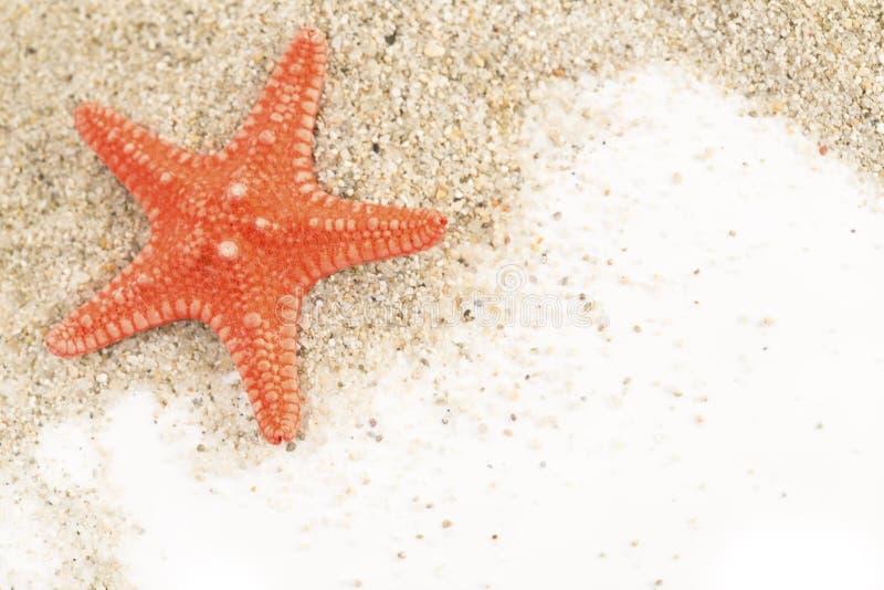 Zeester op een zand royalty-vrije stock afbeelding