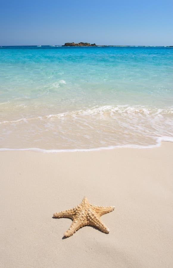 Zeester op het Strand royalty-vrije stock afbeeldingen