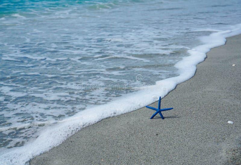 Zeester op het strand dicht bij de oceaan stock afbeelding