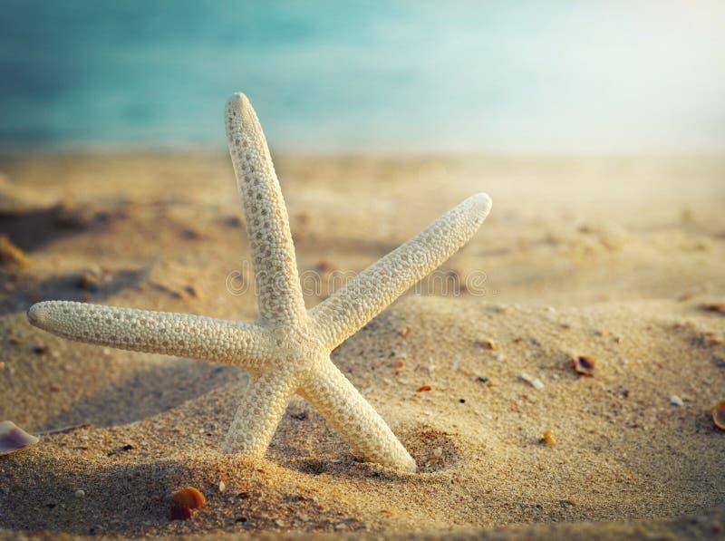 Zeester op het strand en oceaan als achtergrond stock afbeelding