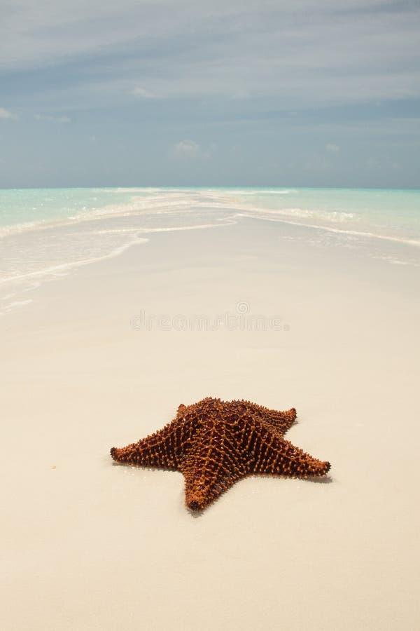 Zeester op sandbar royalty-vrije stock afbeelding