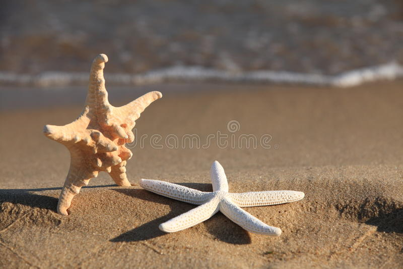 Zeester op strand bij oceaanachtergrond stock foto's