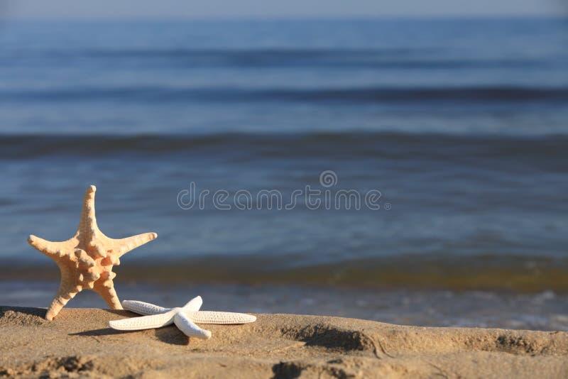 Zeester op strand bij oceaanachtergrond royalty-vrije stock afbeelding