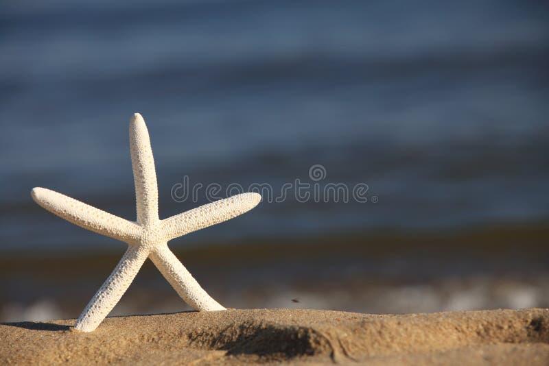 Zeester op strand bij oceaanachtergrond stock fotografie