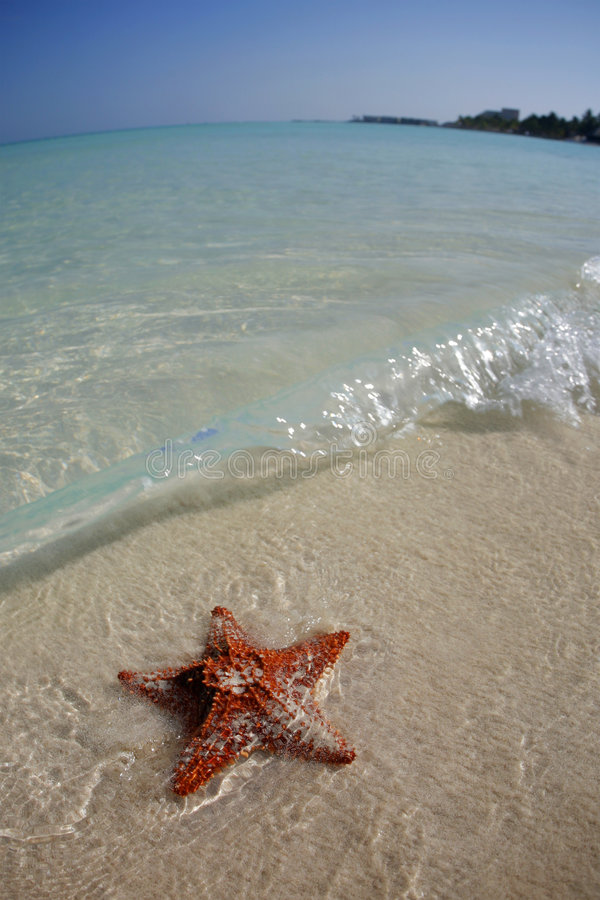Zeester op Tropisch Strand stock fotografie
