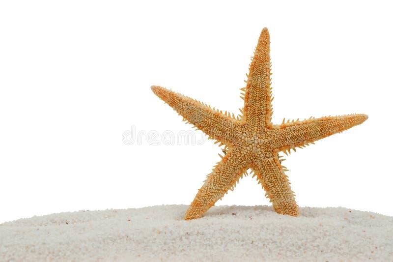 Zeester op zand dat op wit wordt geïsoleerda stock afbeelding