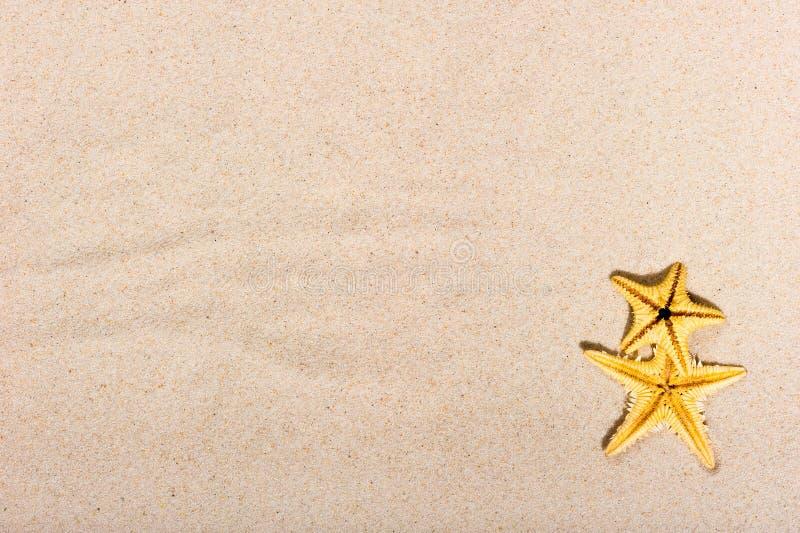 Zeester twee op fijn zand stock afbeeldingen