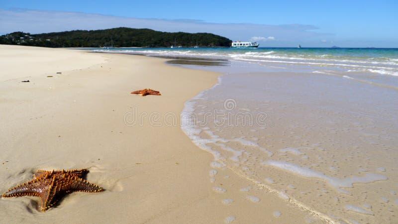 Zeesterren op het zand royalty-vrije stock fotografie