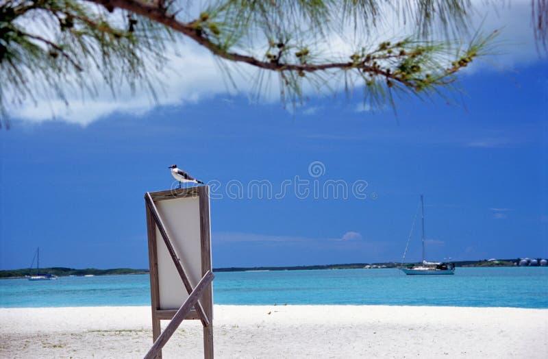 Zeevogel op Teken - wat zichtbare korrel royalty-vrije stock afbeelding