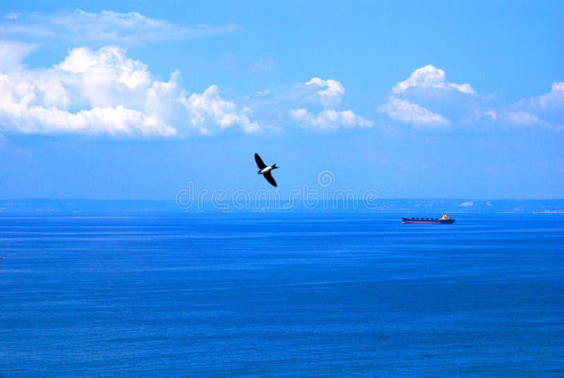 Zeevogel over oceaan royalty-vrije stock fotografie