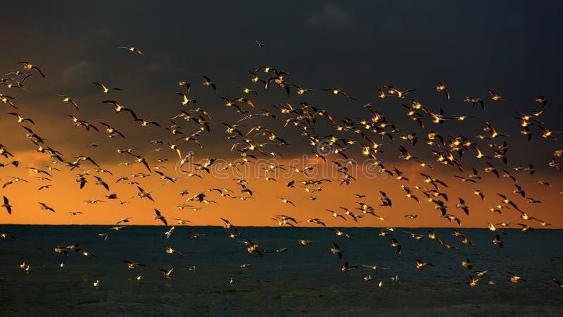 Zeevogels in de wildernis stock foto's