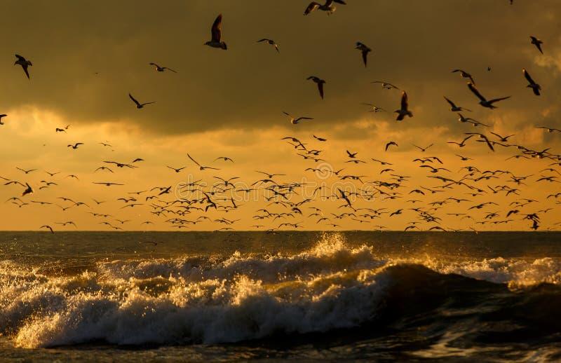 Zeevogels in de wildernis royalty-vrije stock afbeeldingen