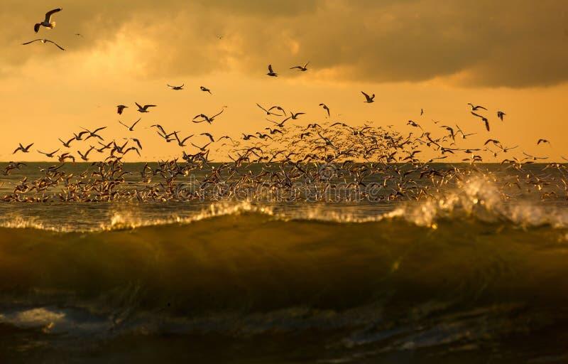 Zeevogels in de wildernis royalty-vrije stock afbeelding