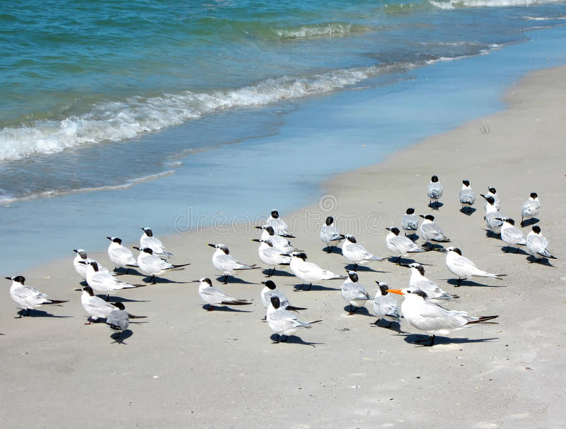 Zeevogels die het strand met een sleeplijn vissen stock fotografie