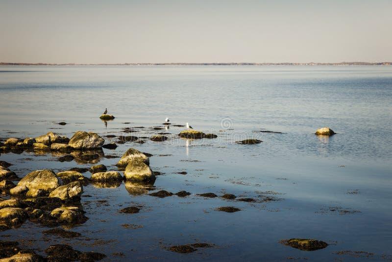 Zeevogels door de kust stock afbeelding