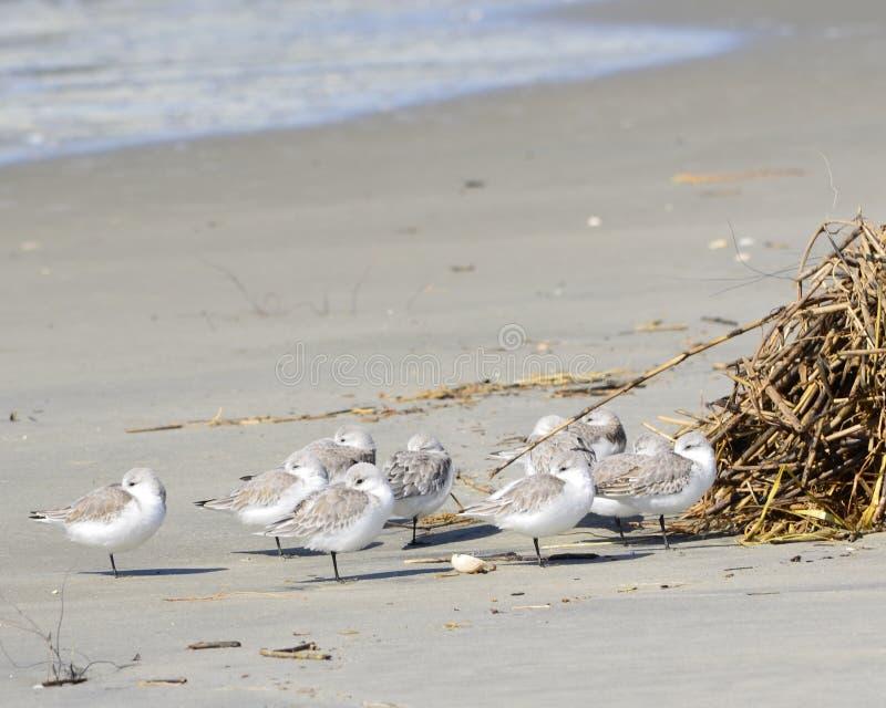 Zeevogels op Sullivans-Eiland royalty-vrije stock afbeeldingen