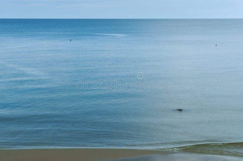 Zeevogels, watervogels in hun huidige habitat stock afbeeldingen