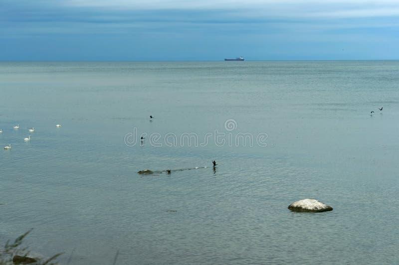 Zeevogels, watervogels in hun huidige habitat stock foto's