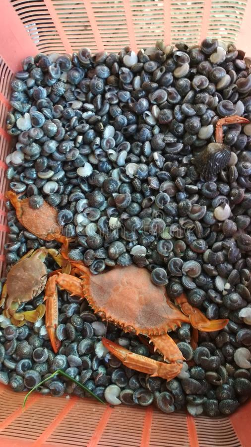 Zeevruchten stock afbeelding