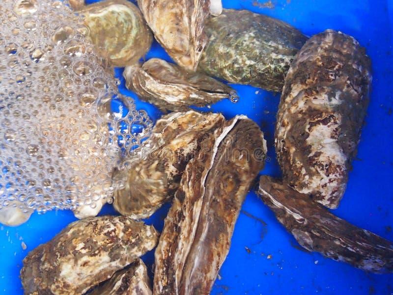 Zeevruchten stock foto