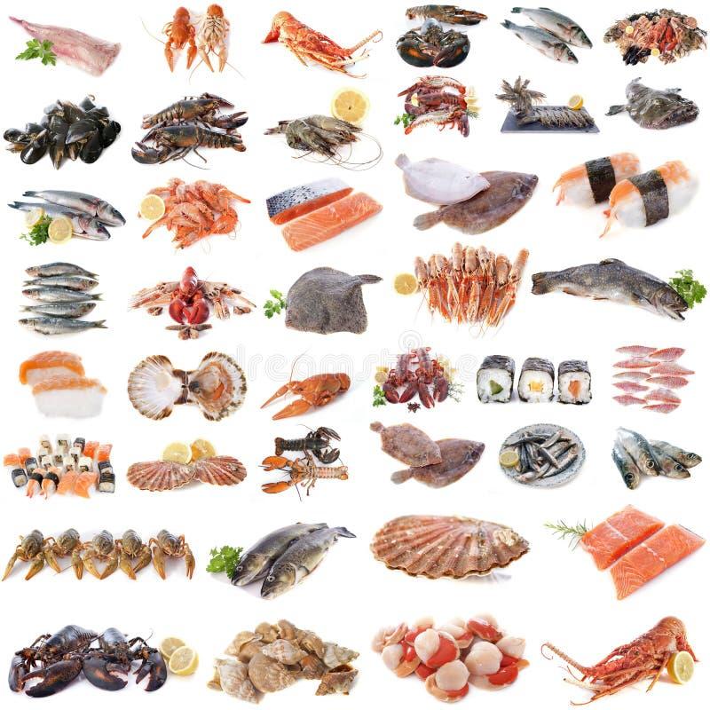 Zeevruchten, vissen en schaaldieren royalty-vrije stock foto