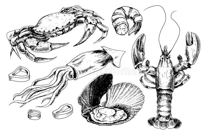 Zeevruchtenhand getrokken inzameling vector illustratie