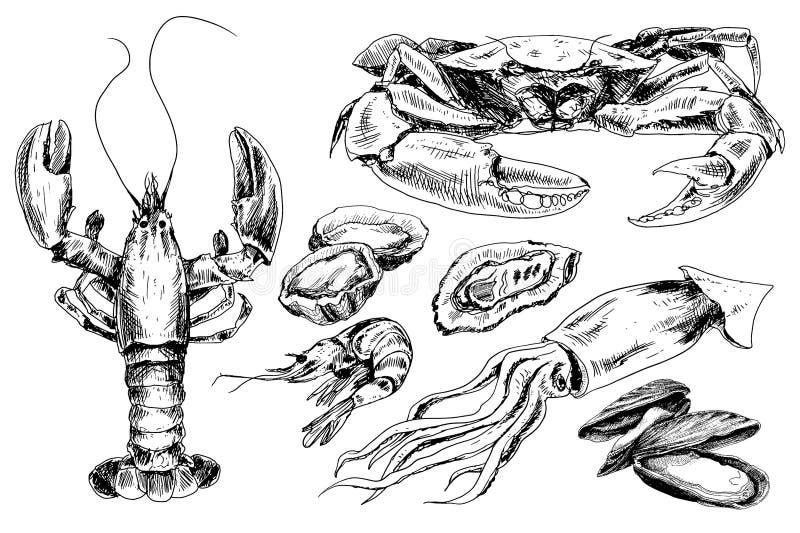 Zeevruchtenhand getrokken inzameling stock illustratie