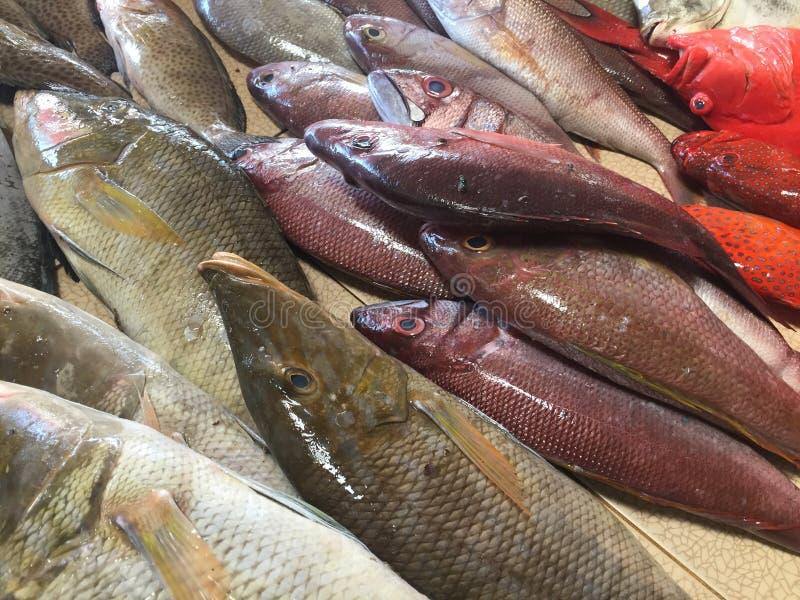 Zeevruchtenmarkt stock afbeeldingen