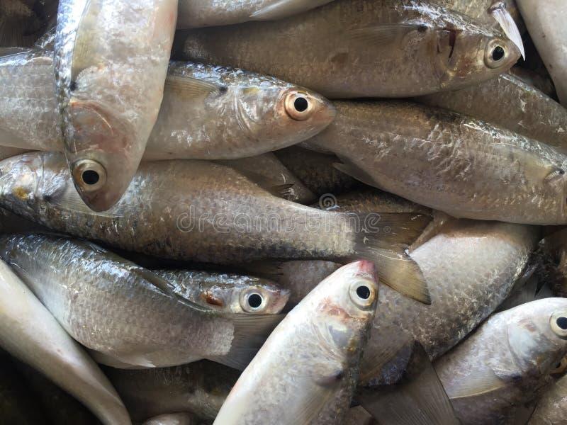 Zeevruchtenmarkt royalty-vrije stock afbeelding