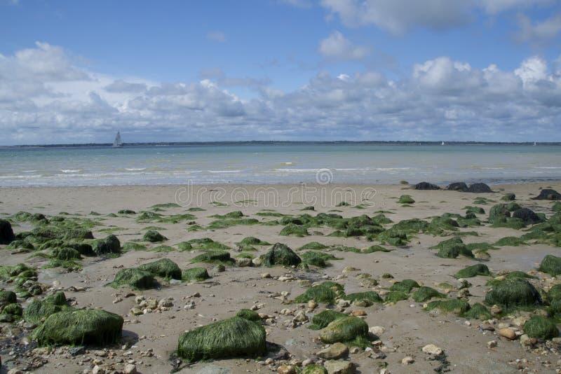 Zeewier behandelde rotsen langs strand bij Fort Victoria stock afbeelding