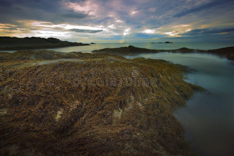 Zeewier op rotsstrand en zonsonderganghemel royalty-vrije stock afbeelding