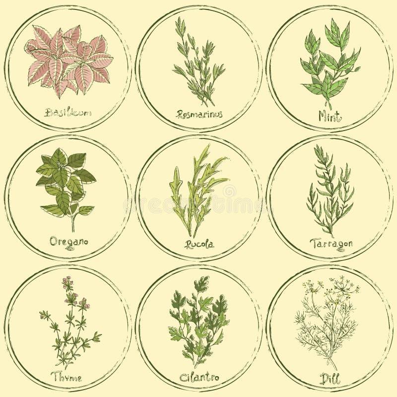 Zegel gekleurde geplaatste kruiden vector illustratie