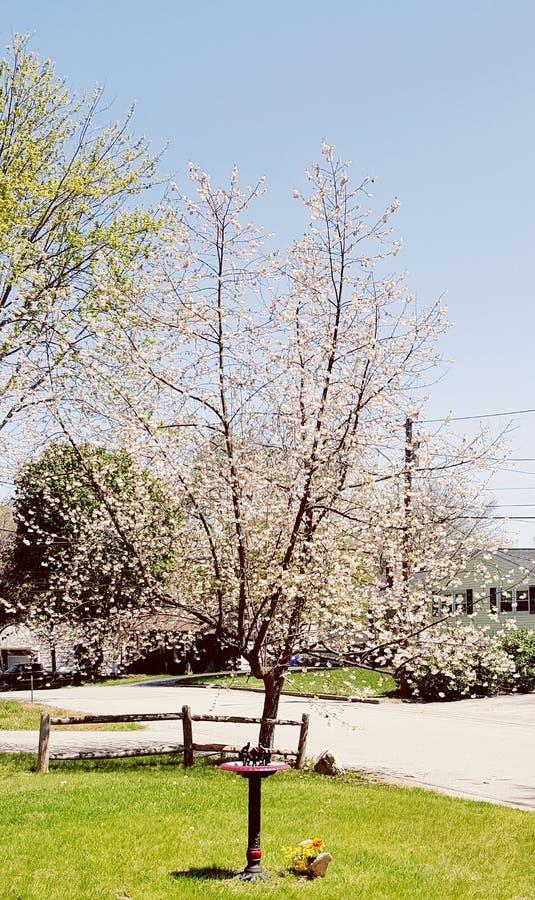 Zeichen des Frühlinges lizenzfreies stockfoto