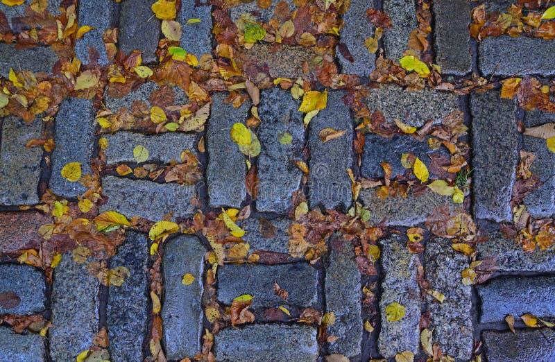 Zeichen des Herbstes mit gefallenen gelben Blättern stockfoto