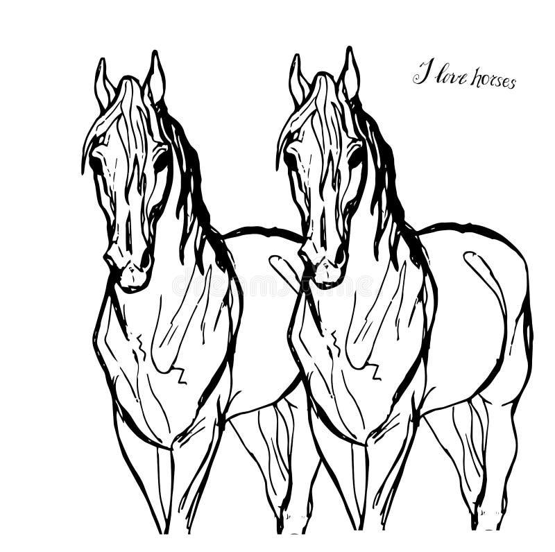 Zeichnen eines Paares Schimmel im vollen Gesicht lizenzfreie abbildung