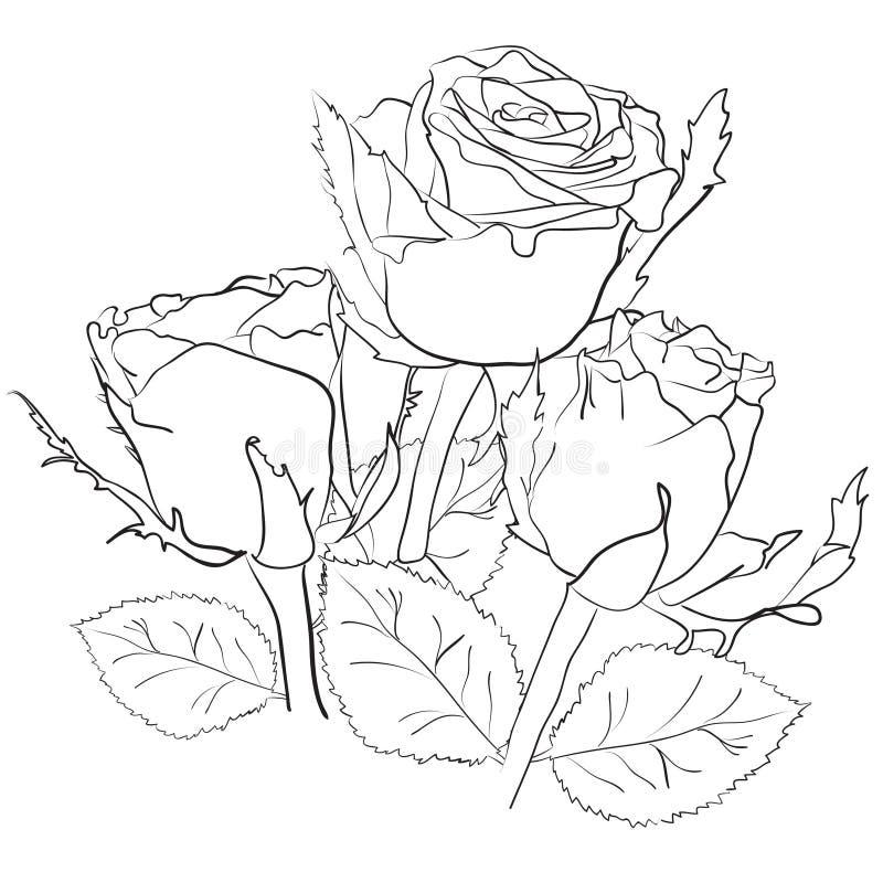 zeichnen mit rosen vektor abbildung illustration von wei 32595672. Black Bedroom Furniture Sets. Home Design Ideas