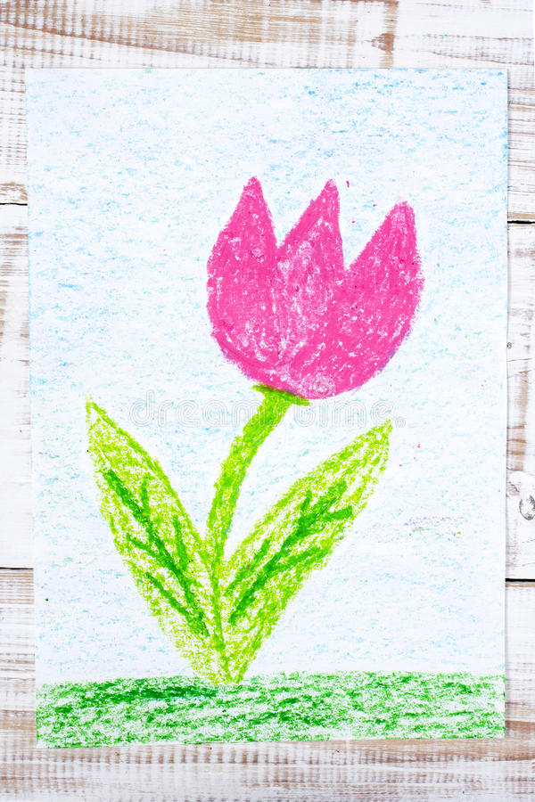 zeichnen sch ne blume rosa tulpe stockbild bild von. Black Bedroom Furniture Sets. Home Design Ideas