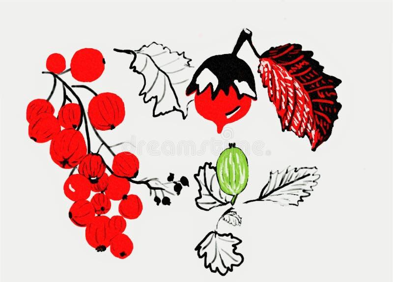 Zeichnung Rote Johannisbeere, Stachelbeere und Nuss stockfoto