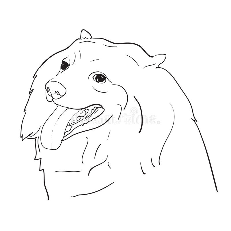 Zeichnung von nettem spritz Hund auf weißem Hintergrund vektor abbildung