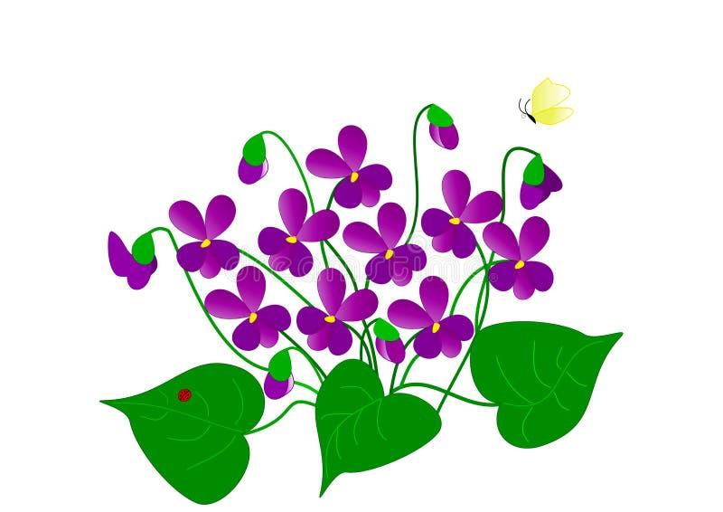 Zeichnung von Veilchen lizenzfreies stockbild