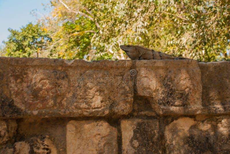 Zeichnungen des Schädels auf dem Stein des Mayas Die Beschaffenheit des Steins Anicent-Maya-Mayapyramide El Castillo Kukulkan in  lizenzfreie stockbilder