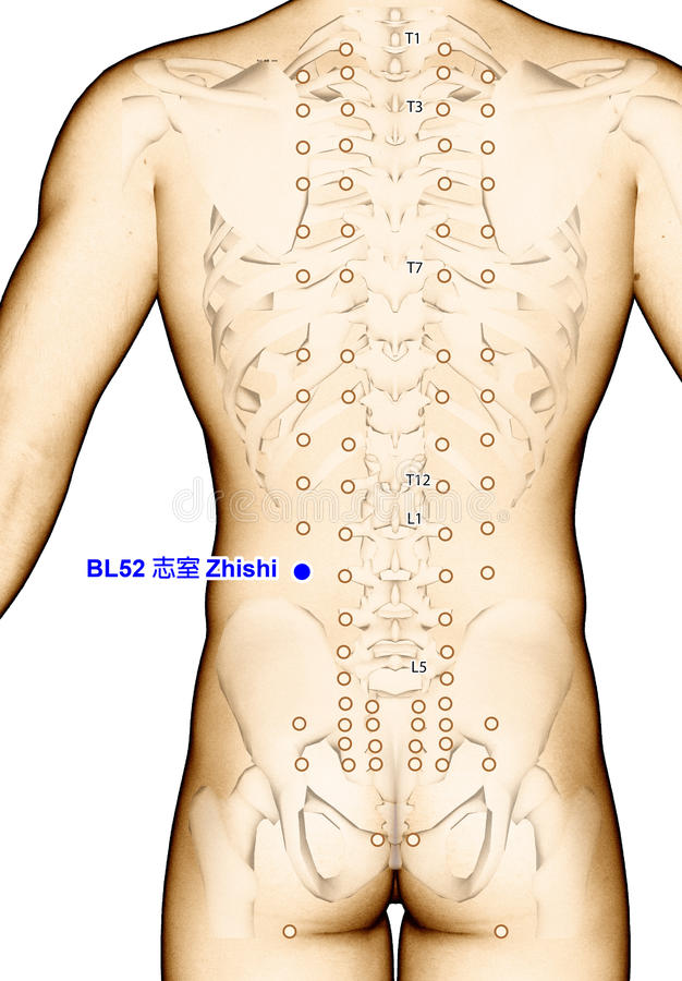 Zeichnungs-Akupunktur-Punkt BL52 Zhishi, Illustration 3D vektor abbildung